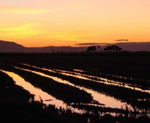 Semana Santa en Delta del Ebro