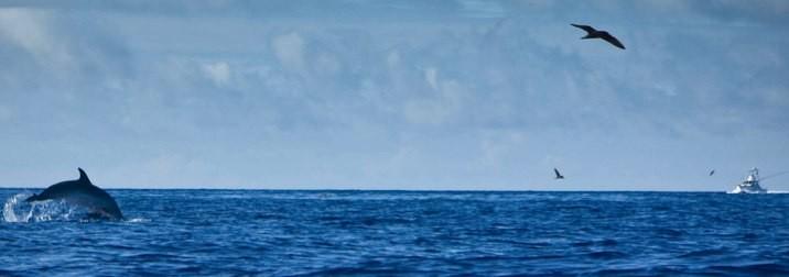 Azores: Ballenas y delfines del 7 al 14 de agosto