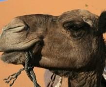 Desierto y Dunas en Marruecos