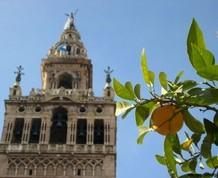 Semana Santa en Sevilla, Niños Gratis