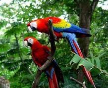 Costa Rica, el canopy aventurero