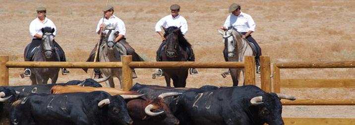 Toro bravo, caballos, flamenco y jamón: el Jerez auténtico