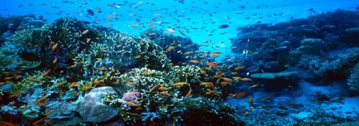Buceo en el Mar Rojo.