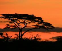 Tanzania safari truck, lunes último día para apuntarse