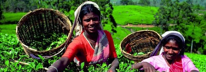 """Fin de año en Sri Lanka: """"La Perla del Indico""""   ÚLTIMAS 5 PLAZAS"""