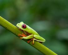 Costa Rica ¡Pura Vida!