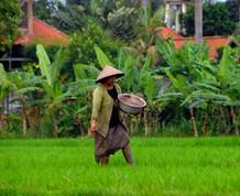 Indonesia, Bali viaje para Solteros