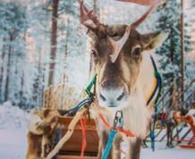 Vacaciones Singles: Puente de Diciembre en Laponia