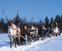 Fin de Año en Laponia. Naturaleza y aventura
