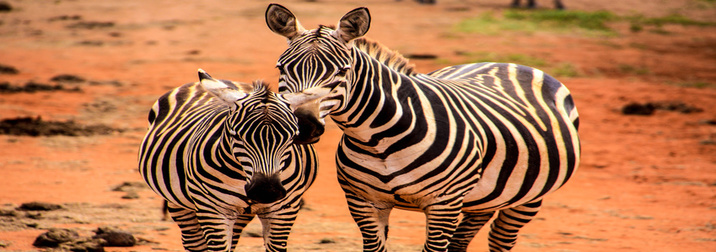 Agosto: Kenya, fauna y sabanas II