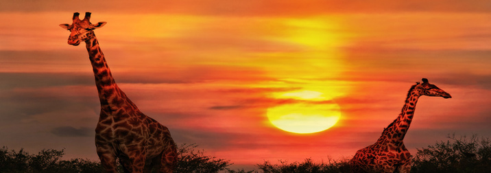 Kenya, fauna y sabanas I