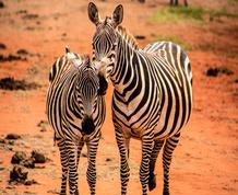 Agosto: Kenya, fauna y sabanas