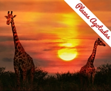 Agosto: Kenya, fauna y sabanas I