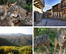 Octubre: Tras las huellas del lobo