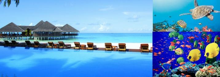 Maldive per Single