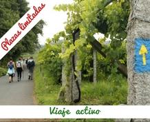 Vive el Camino de Santiago