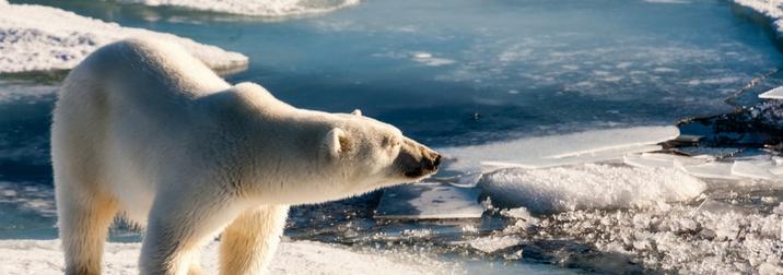Agosto: Tierra de hielo y Osos Polares: Svalbard