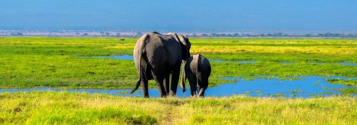 Agosto: Kenya y Zanzibar