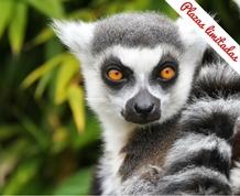 Octubre en Madagascar: Fauna y flora únicos en el Mundo