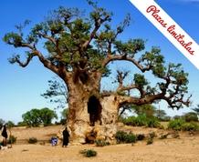 Julio en Senegal: ruta ética, historica y solidaria