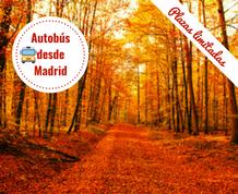 Puente de Noviembre: Otoño en La Selva de Irati. Salida desde Madrid