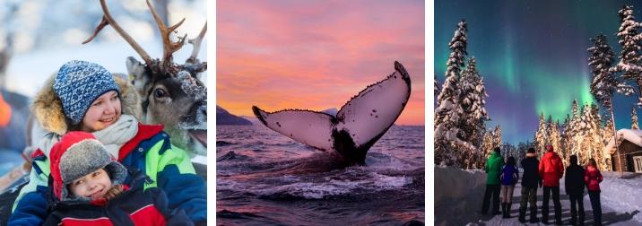 Puente de Diciembre: Laponia en familia. Aventuras entre orcas, huskies y auroras boreales