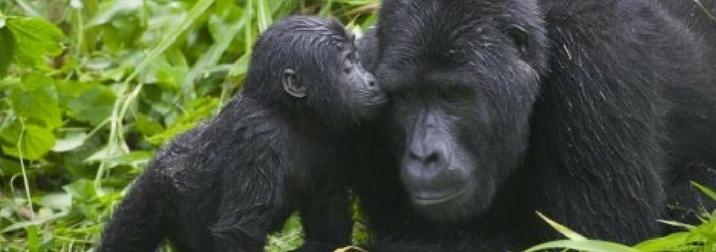 Agosto en Uganda, la perla de África