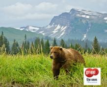 Agosto en Alaska: viaje a la última frontera