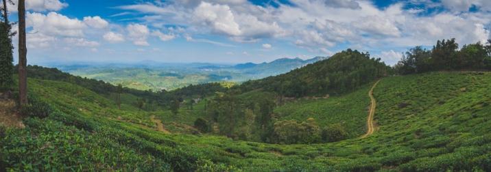 India Sur: Fin de año en Kerala