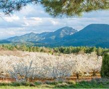 Marzo: El Valle del Jerte en flor