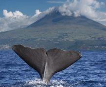 Islas Azores: el secreto mejor guardado del Atlántico