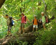 La Selva Negra con niños. Bosques y paisajes de cuento