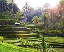 Indonesia-Bali. La isla entre las islas