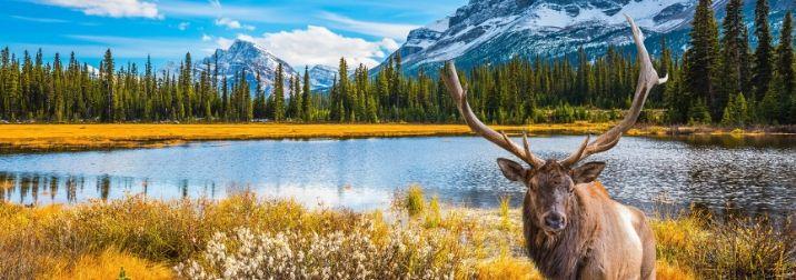 Canada Este. Flor de Lis castillos y ballenas