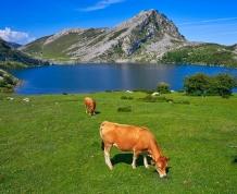 Vacaciones con niños en Picos de Europa