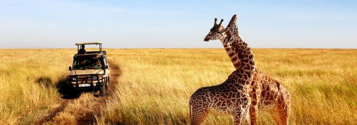 Safari en Tanzania: en busca de los 5 grandes