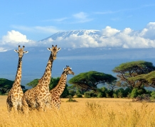 Increible Kenia: Parques y Safaris