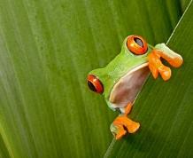 Costa Rica: naturaleza, aventura y PURA VIDA