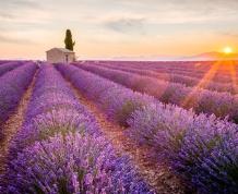 La Provenza Francesa en primavera