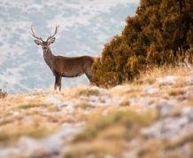 Safari en la Reserva de Boumort en pleno Pirineo